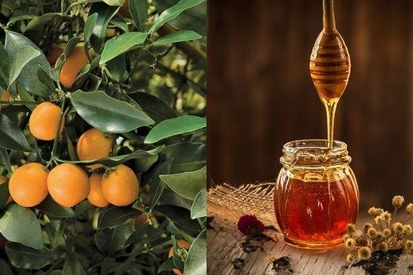 uống quất với mật ong có giảm cân không, uống quất mật ong giảm cân trà quất mật ong giảm cân, quất ngâm mật ong giảm cân, nước quất mật ong giảm cân, giảm cân bằng quất với mật ong, giảm cân bằng mật ong và quất, uống quất với mật ong có giảm cân không, quất mật ong giảm cân, Uống nước tắc có giảm cân không, Uống mật ong giảm cân đúng cách, Kinh nghiệm giảm cân bằng mật ong nước ấm, Giảm cân 7 ngày với mật ong, Giảm 6kg trong 3 ngày với mật ong, Cách giảm cân bằng mật ong và nước ấm, Giảm cân bằng mật ong trong 3 ngày, Có nên giảm cân bằng mật ong